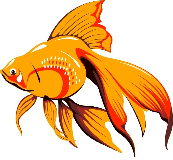 600x555 Golden Fish Clip Vector Clip Free Vector Free Download