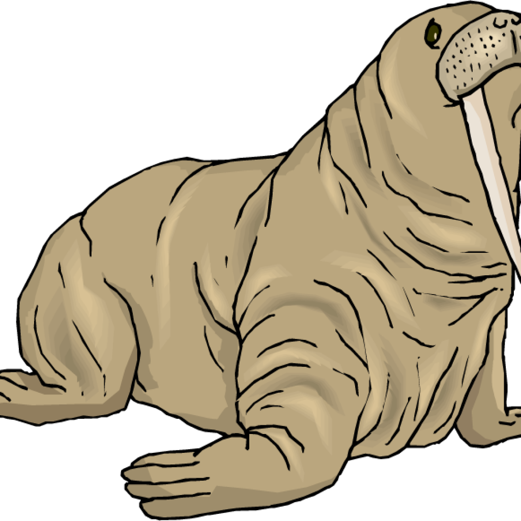 Walrus Clipart at GetDrawings.com | Free for personal use Walrus ...