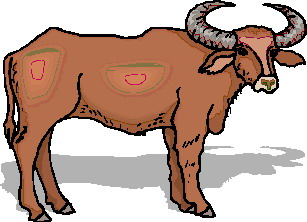 307x222 Buffaloes Animated Images, Gifs, Pictures Amp Animations