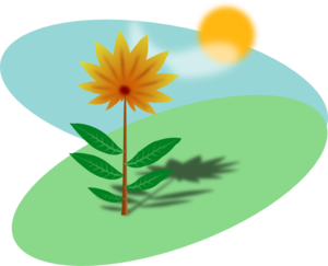 300x243 Plant And Sun Clipart Amp Plant And Sun Clip Art Images