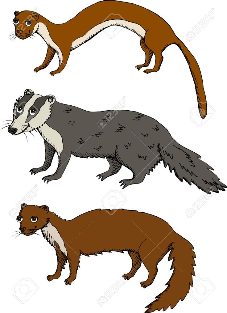 Weasel Clipart
