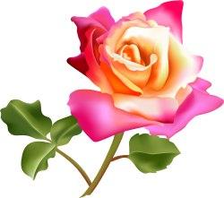 250x221 Flower Clip Art