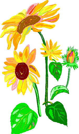 302x508 Sunflower Clip Art Flowers And Plants
