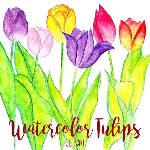 570x570 Watercolor Tulips Clip Art, Custom Invitations Clip Art, Digital