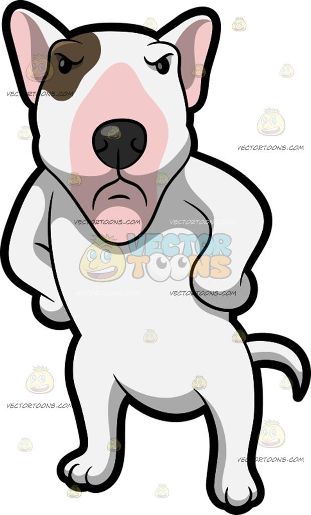 620x1024 An Angry Bull Terrier Cartoon Clipart Vector Toons