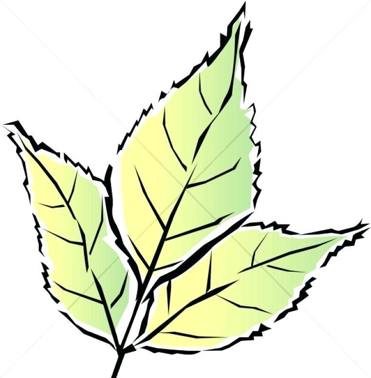 762x776 Leaves Images Clip Art Twelve Grunge Leaves Twelve Grunge Fall