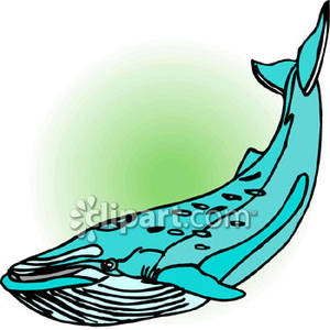 300x300 A Blue Whale With Barnacles Royalty Free Clipart Picture