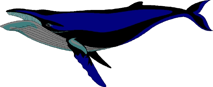 720x297 Free Whale Clipart 2