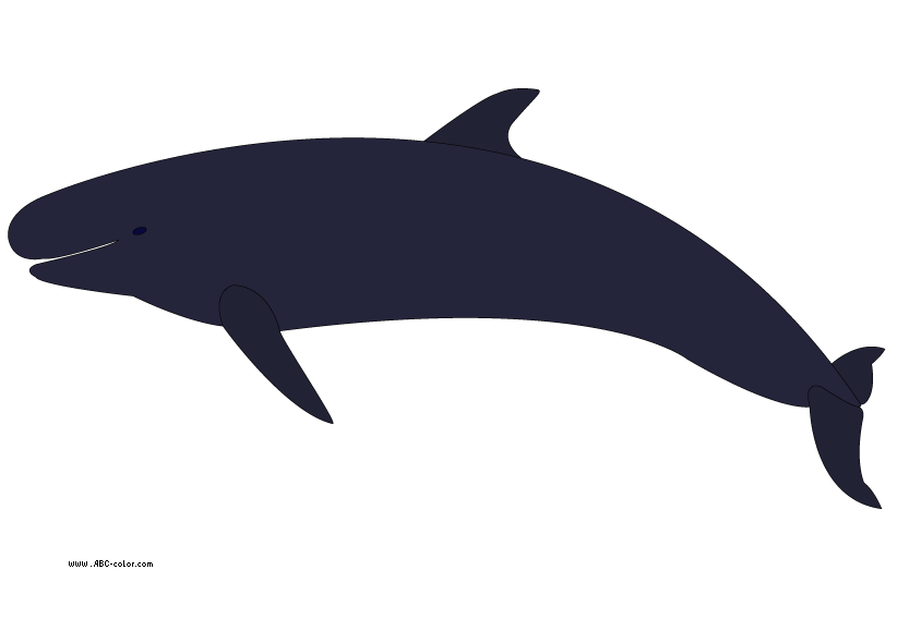 822x567 Collection Of Whale Clipart No Background High Quality, Free