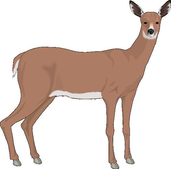 600x596 Staring Deer Svg Clip Arts Download