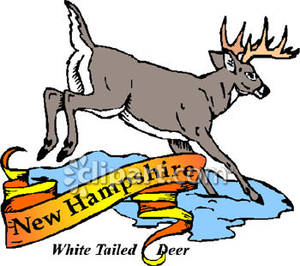 300x266 State Animal Of New Hampshire, The White Tailed Deer Royalty Free