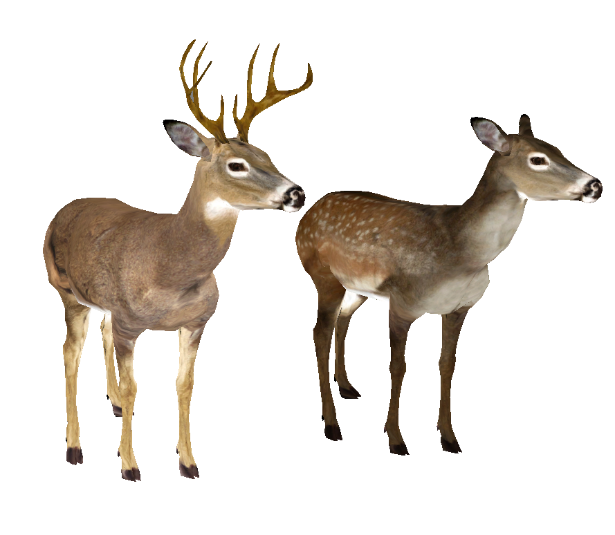 889x774 White Tailed Deer Clipart Transparent Background
