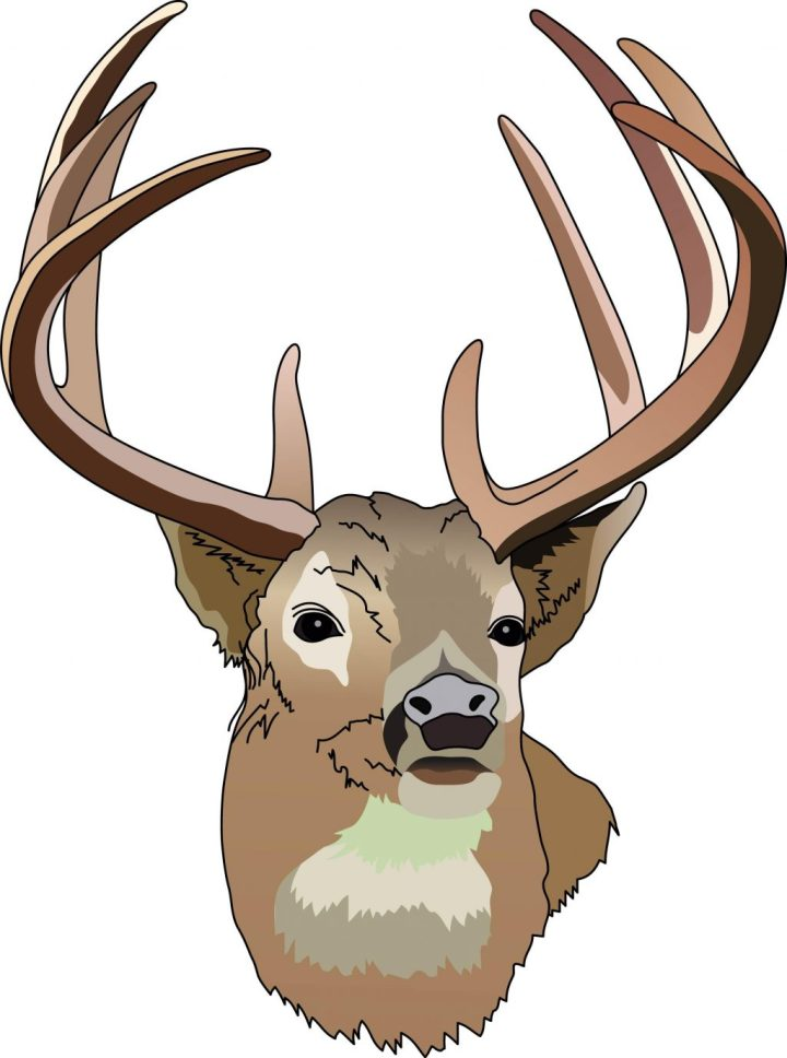 720x968 Whitetail Deer Clipart Free Download Clip Art