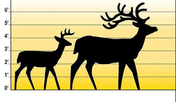 600x349 White Tailed Deer Cedar Springs Post Newspaper