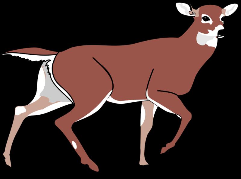 800x595 Whitetail Deer Clipart
