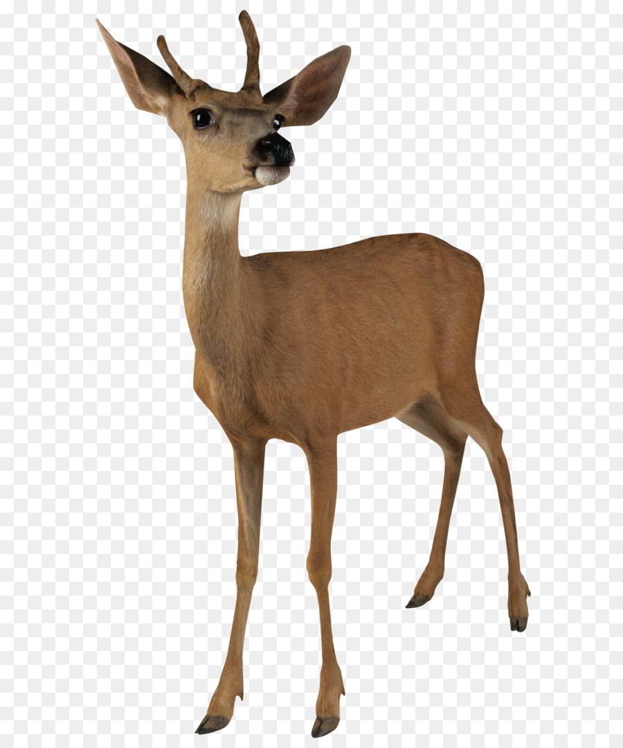 900x1080 Deer Clip Art