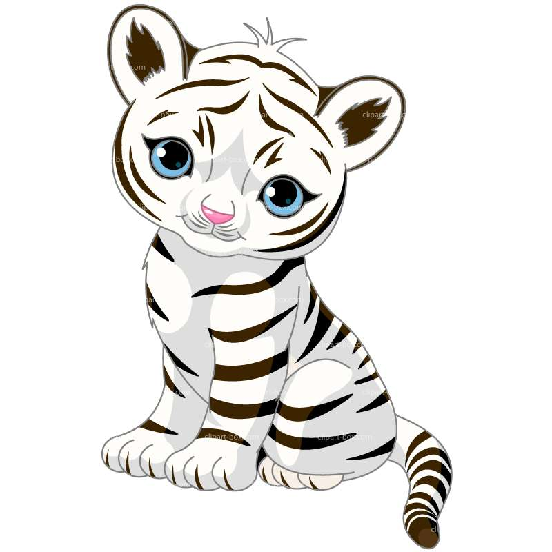 800x800 White Tiger Clipart Clipart White Tiger Royalty Free Vector Design