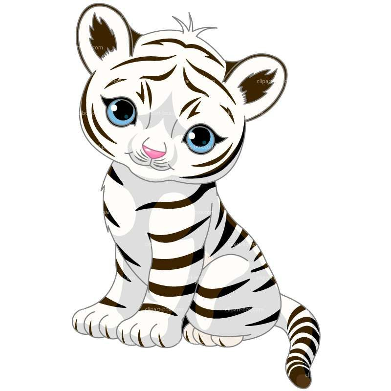 800x800 Clipart White Tiger Royalty Free Vector Design Illustration