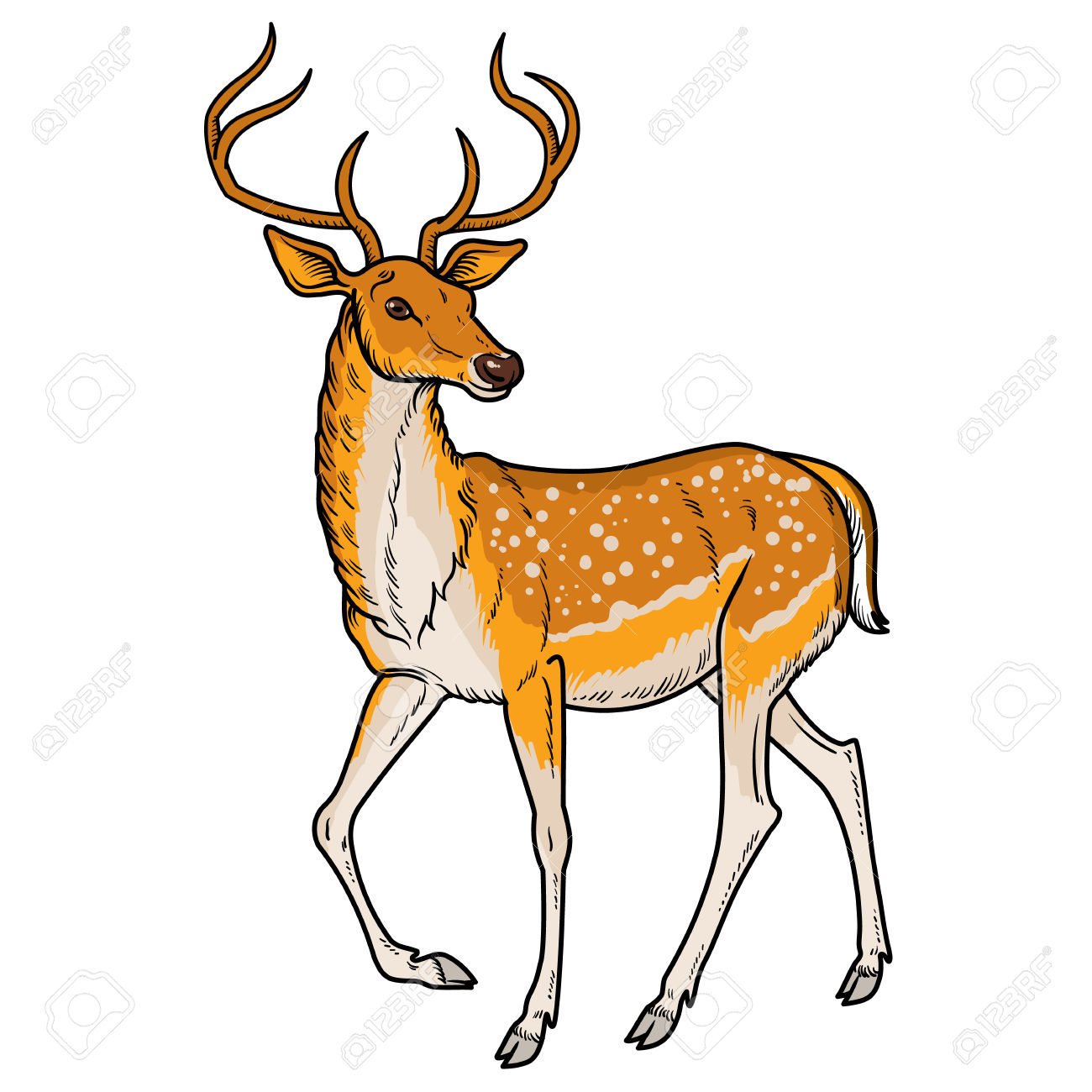 whitetail buck clipart at getdrawings com free for personal use rh getdrawings com deer clip art portrait deer clip art pictures