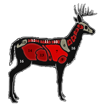 362x380 Whitetail Deer The Hunter Wikia Fandom Powered By Wikia