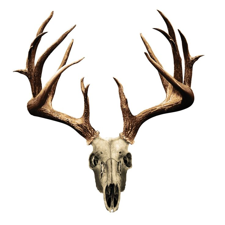 Whitetail Clipart