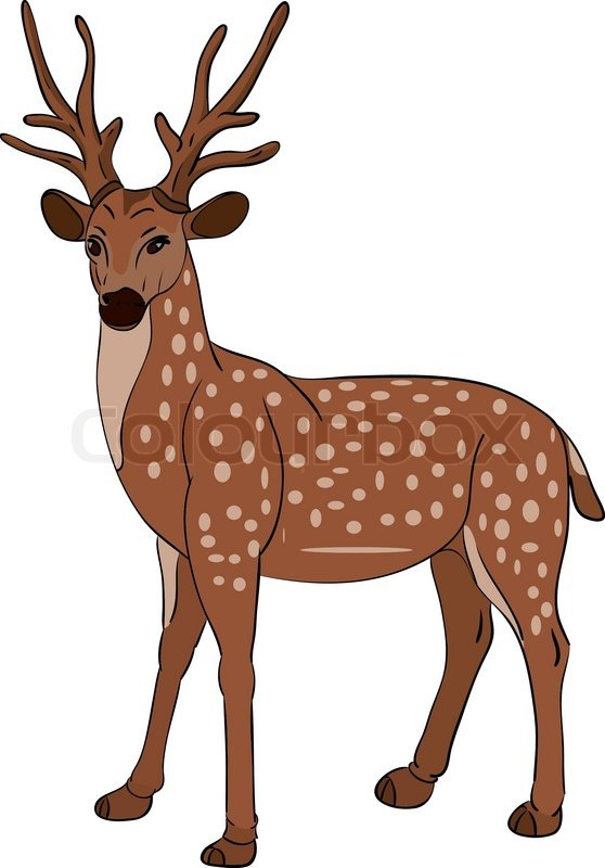 558x800 Deer Clipart, Suggestions For Deer Clipart, Download Deer Clipart