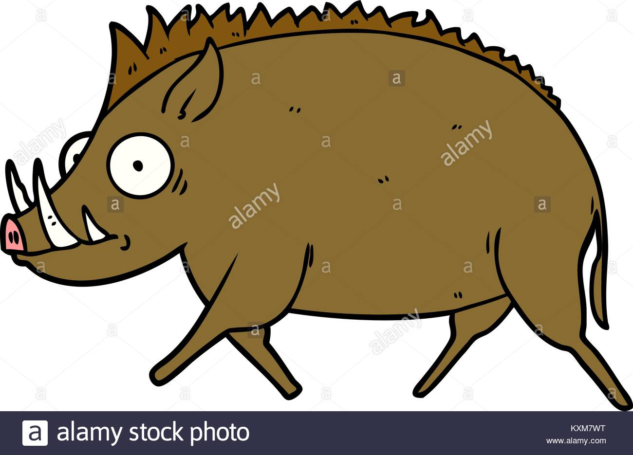 1300x935 Illustration Wild Boar Stock Photos Amp Illustration Wild Boar Stock