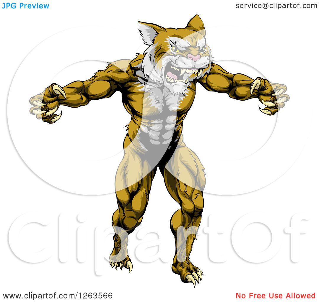 1080x1024 Clipart Of A Muscular Fierce Wildcat Man Attacking
