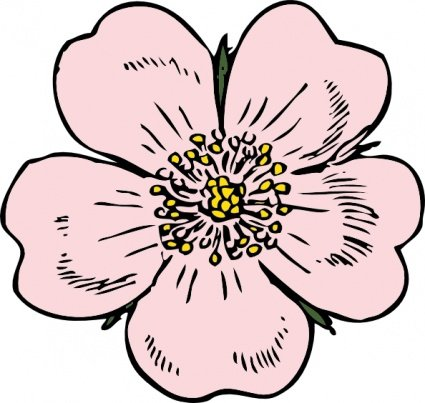 425x403 Free Wild Rose Clipart And Vector Graphics