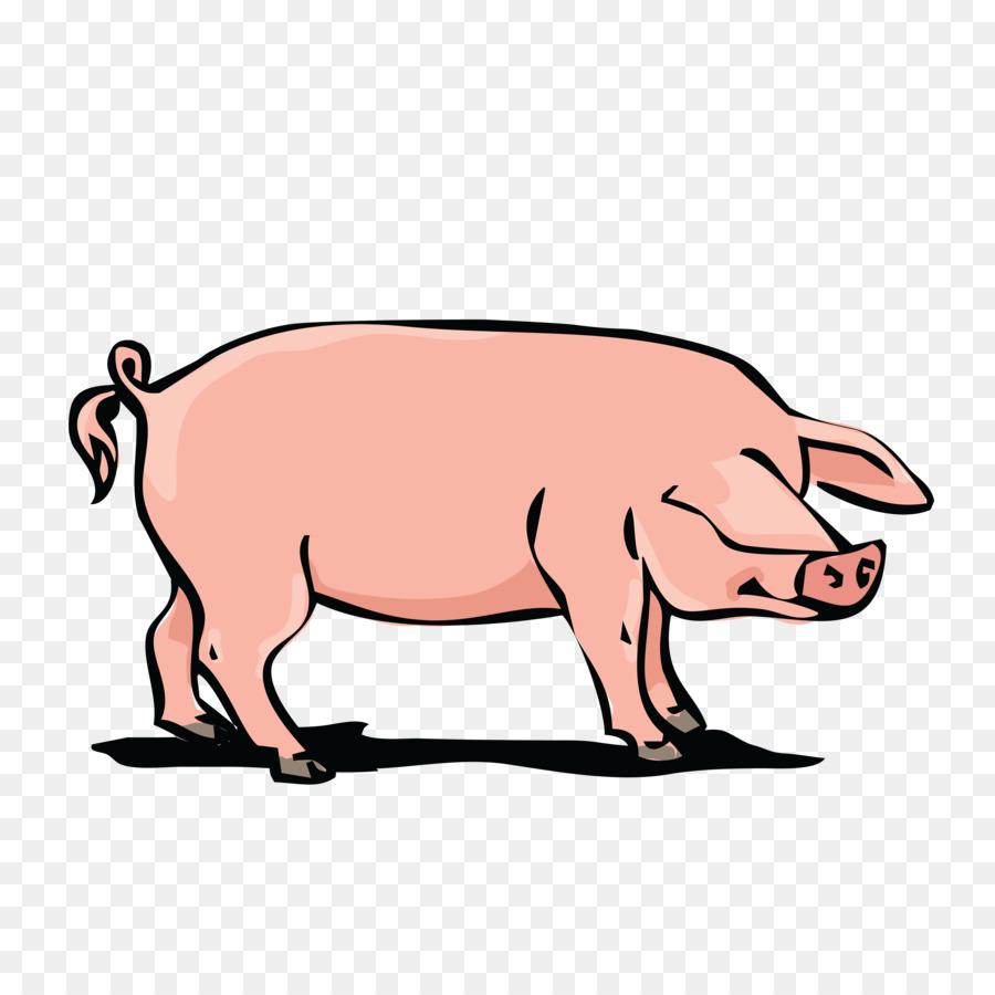 900x900 Domestic Pig Pork Clip Art