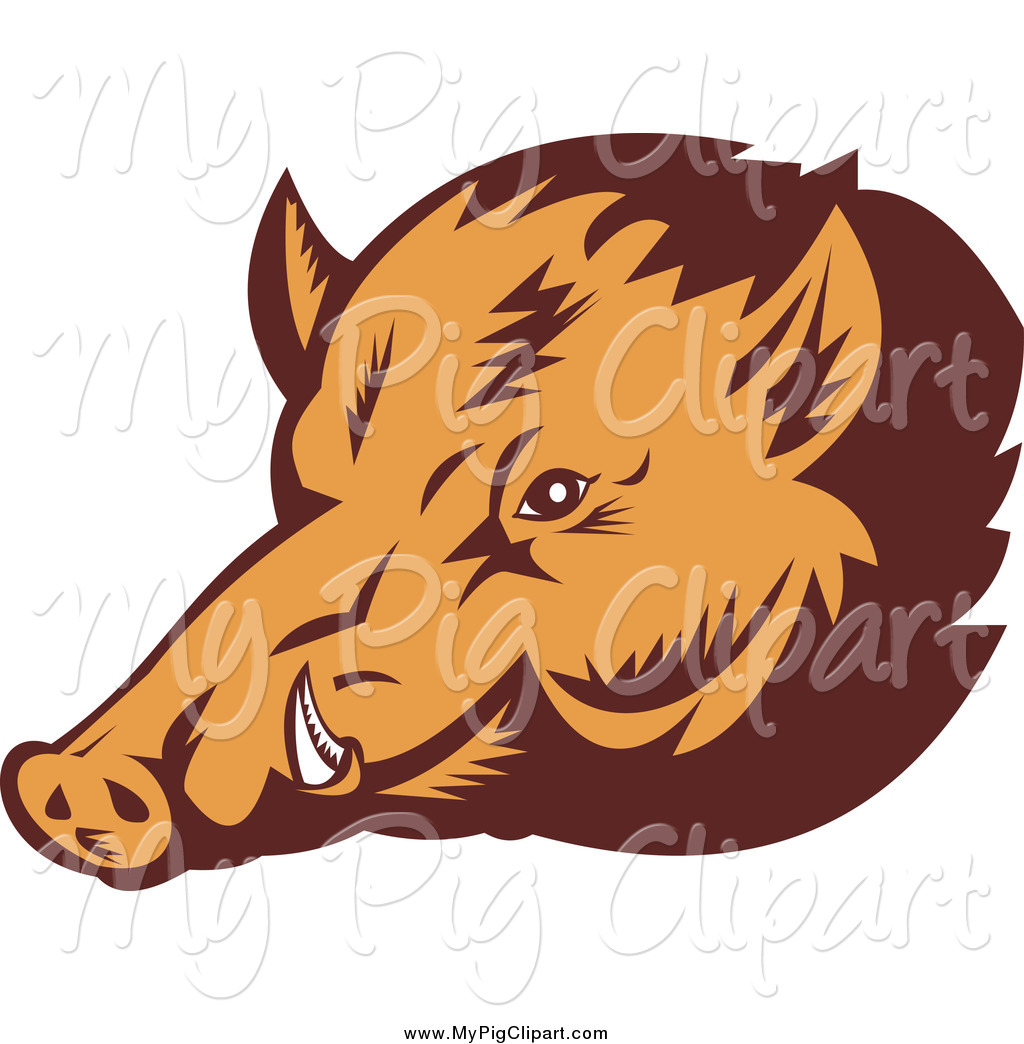 1024x1044 Royalty Free Wild Boar Stock Pig Designs