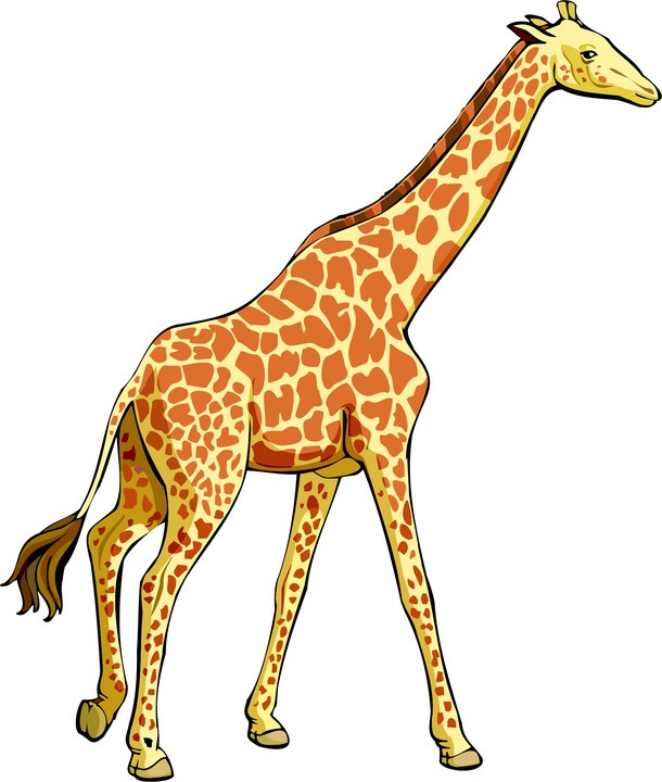 610x720 Download Giraffe Clipart