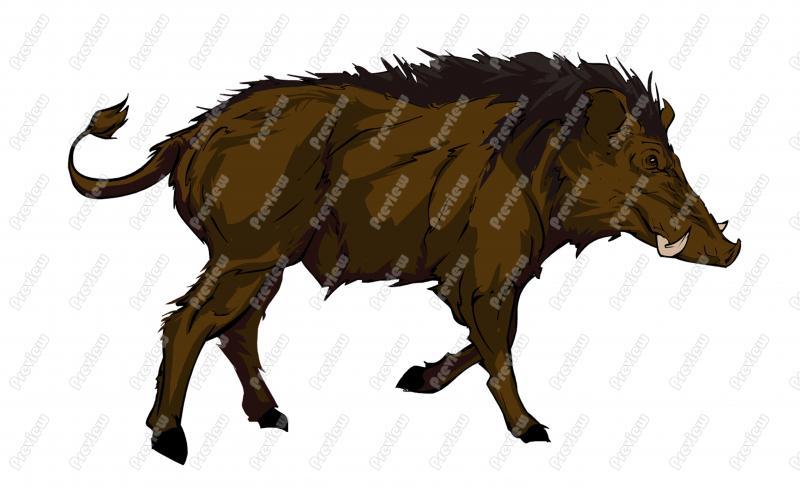 800x487 Wild Boar Character Clip Art