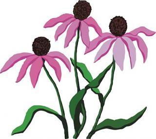Wildflower Clipart
