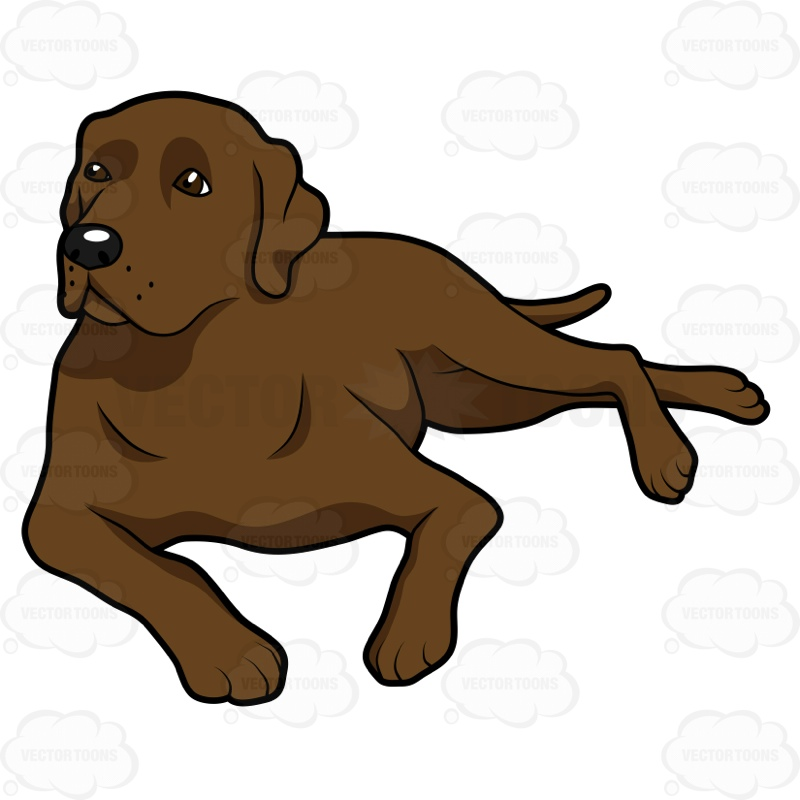 800x800 Puppy Clipart Yellow Lab