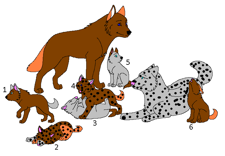 741x513 Wolf Pup Adoptables 2 By Wolfpupadoptions132