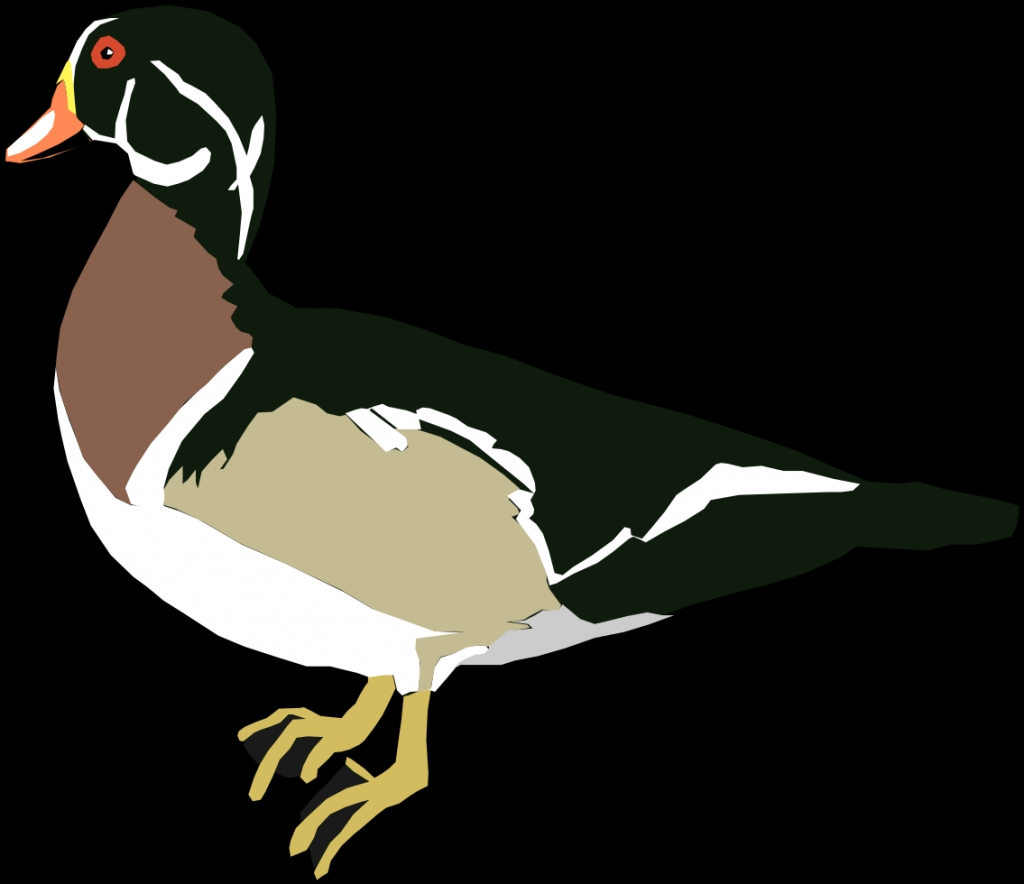 1024x884 Wood Duck Clipart Clipart Panda Free Clipart Images With Regard