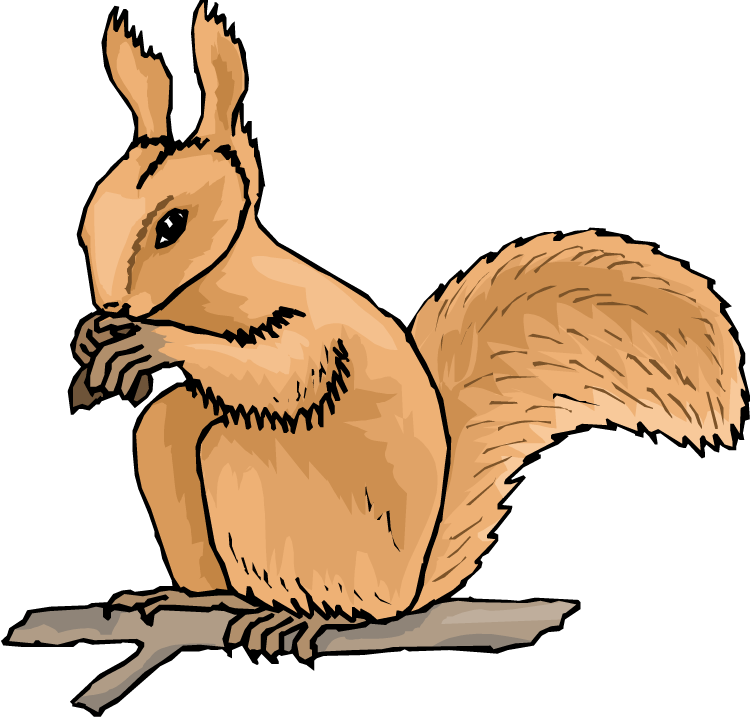 750x718 Squirrel With Nut Clipart