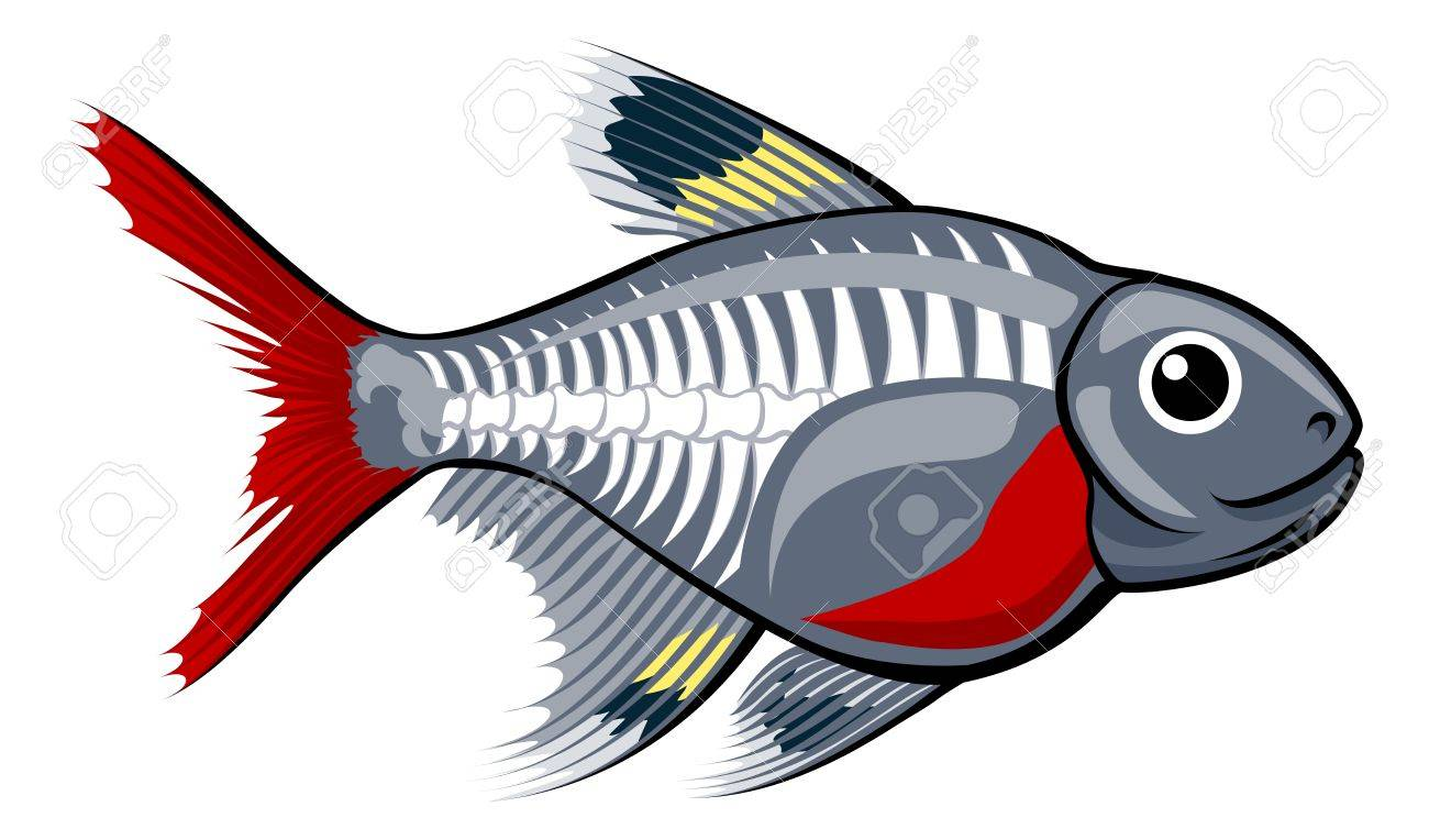 1300x764 X Ray Fish Clipart Yanhe Clip Art