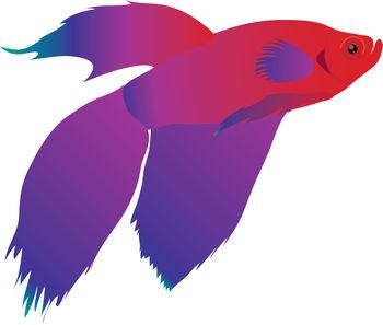 350x297 Betta Fish Clip Art Amp Look At Betta Fish Clip Art Clip Art Images