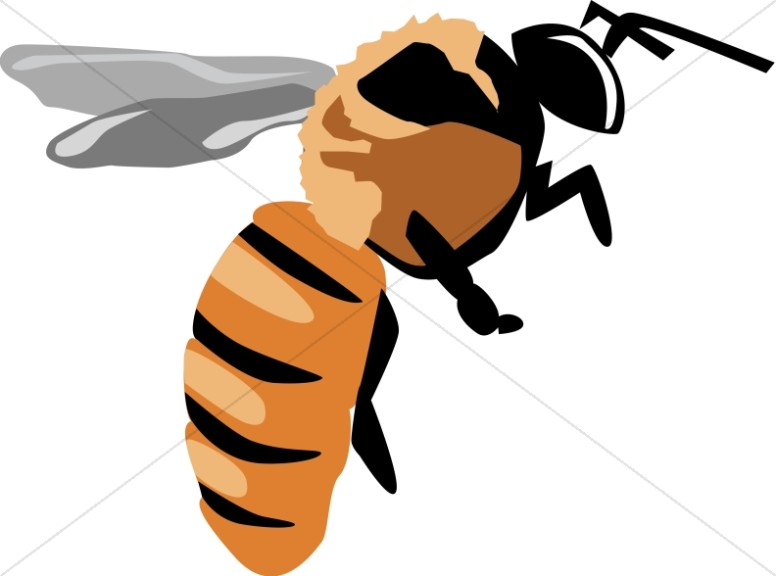 Yellow Jacket Clipart At Getdrawings Com Free For Personal Use