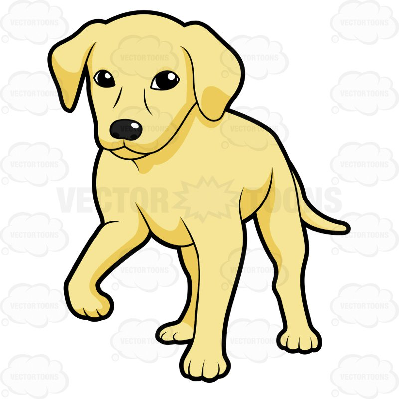 800x800 Golden Retriever Puppy Standing With One Paw Off The Ground