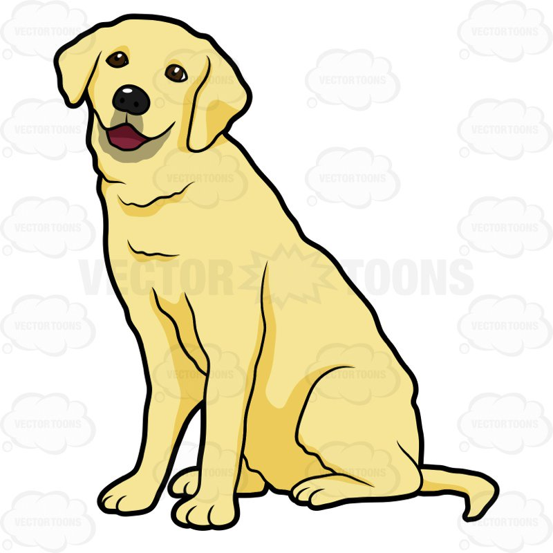 800x800 Side View Of A Yellow Labrador Sitting Cartoon Clipart Vector Toons