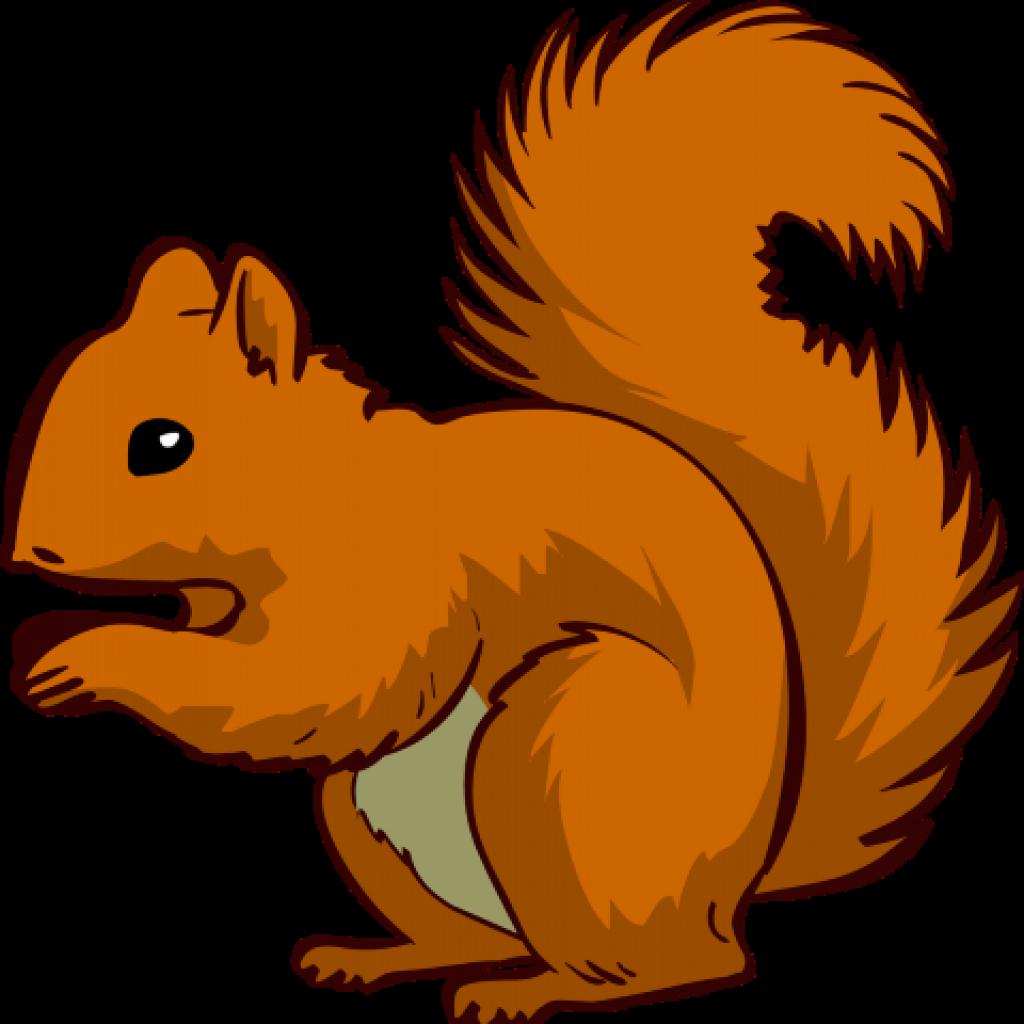 1024x1024 Squirrel Clipart Clip Art Photo Niceclipart For Teachers