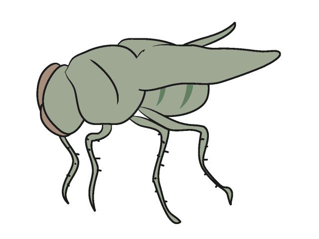 640x480 Flies Fly Animals Clip Art Free Illustrations