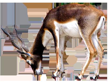 413x312 Animal Clip Art