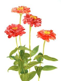236x314 Daily Watercolors Zinnias Watercolor Painting Watercolor How