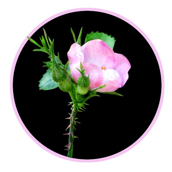 591x591 Flower Image Gallery