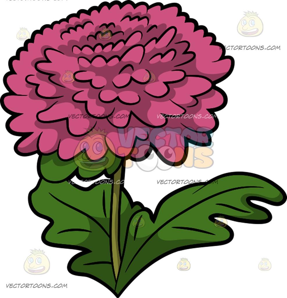 988x1024 A Pink Chrysanthemum Flower Cartoon Clipart Vector Toons