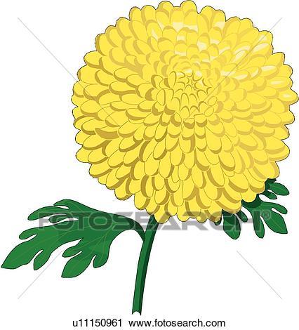 426x470 Chrysanthemum Clipart Group